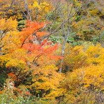 *【清津峡の紅葉】  寒暖差の激しい清津峡の紅葉と岩礁とが織り成す色鮮やかな造形美です。