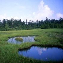 *小松原湿原(夏)