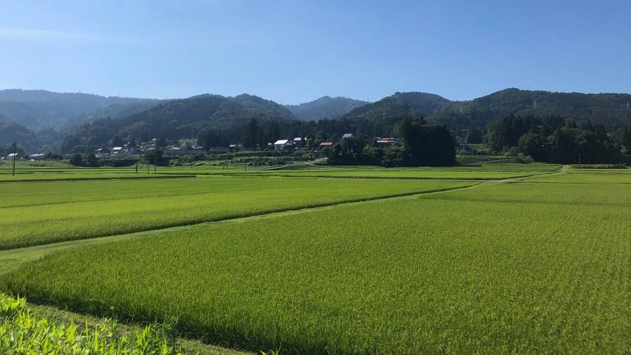 周辺景色(夏の田園)