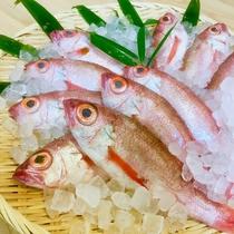 【厳選食材】山陰高級魚・天然のどぐろ