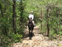森の小道コース