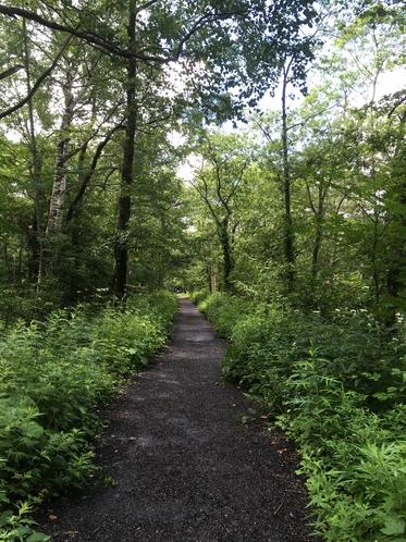 新緑の上高地散策路