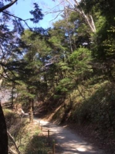 上高地散策路