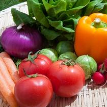 *北海道産の有機野菜や自家製ハーブなど、新鮮で安心な食材を集めています!