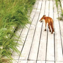 *周辺散策/キタキツネなどの野生動物に出会えるかもしれません♪