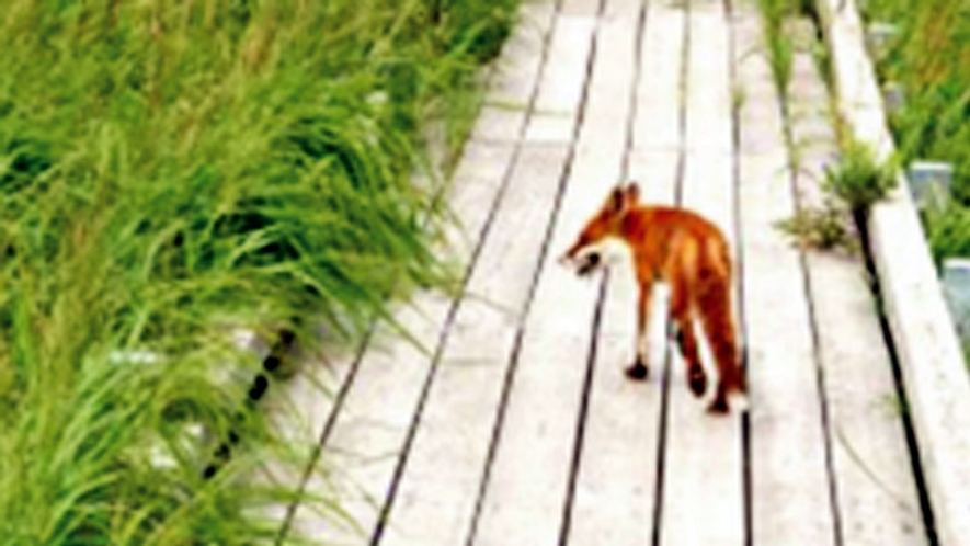 *周辺散策/キタキツネなどの野生動物に出会えるかもしれません。