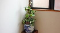 *【館内一例】館内のいろいろな場所で観葉植物を育てております♪