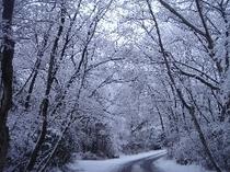 雪景色の比良の森のひとこま