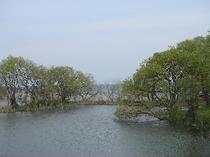 琵琶湖、湖岸の風景