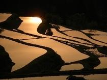 (周辺)棚田に夕日が輝く