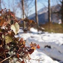 *【外観】(冬)雪景色