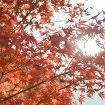 *【箱根の風景/秋】