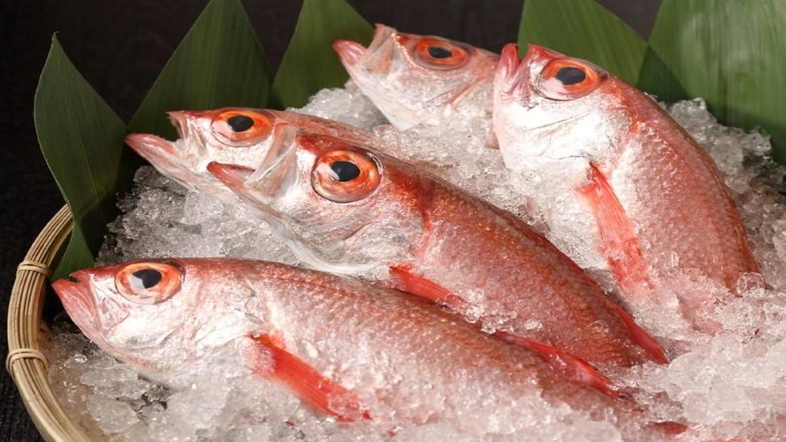 山陰を代表する高級魚「のどぐろ」イメージ