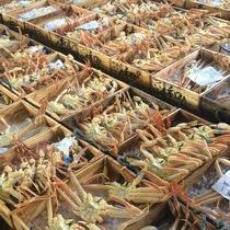 水揚げされた松葉蟹
