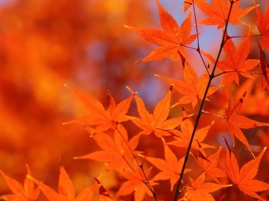 栃木の紅葉!秋の訪れを感じる鬼怒川で過ごす1泊2食バイキング付きプラン!