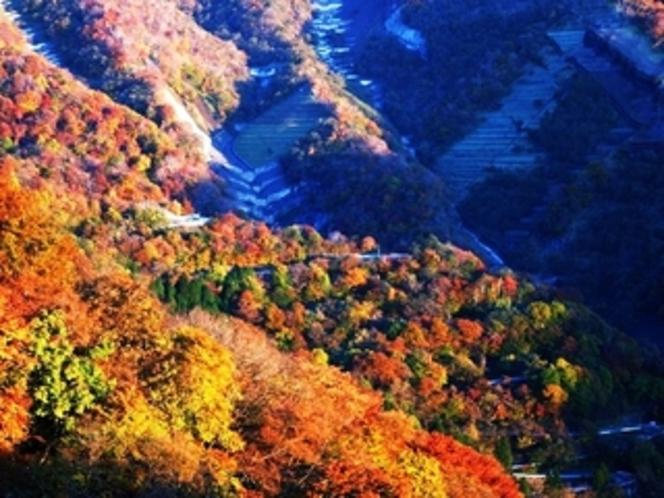 日光いろは坂の紅葉