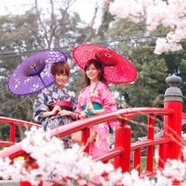 玉造温泉 桜