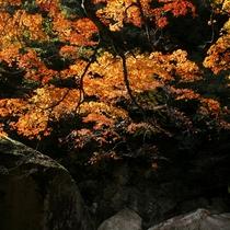 秋 鬼の舌震