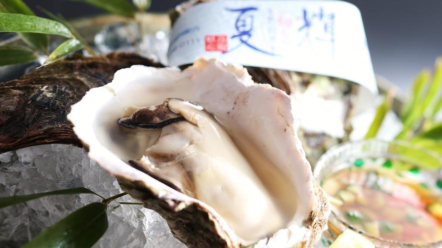 """【鳥取港産天然岩牡蠣「夏輝」】殻の長さが13cm以上の高品質な岩牡蠣だけに「夏輝」の""""ブランド帯""""付"""