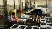 【日本海の海の幸】兵庫県/但馬地区の浜坂漁港は湯村温泉から車20分