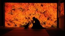 【安国寺/どうだんつつじ紅葉】当館より車約1時間半 写真提供:但東シルクロード観光協会