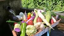【新鮮な野菜】澄んだ空気、広大な緑が広がる兵庫県・但馬地区でのびのびと育った新鮮野菜