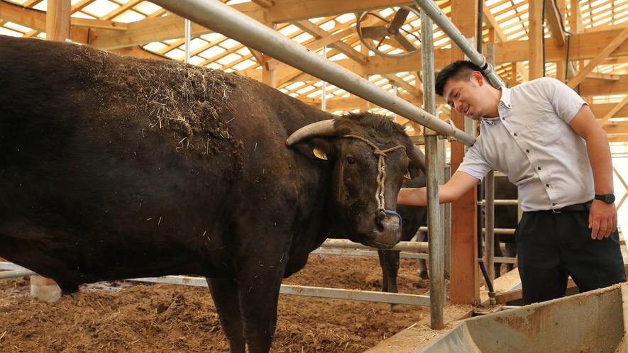 【地元銘柄/但馬牛】契約牧場さんから品質の高い上質な但馬牛を仕入れています
