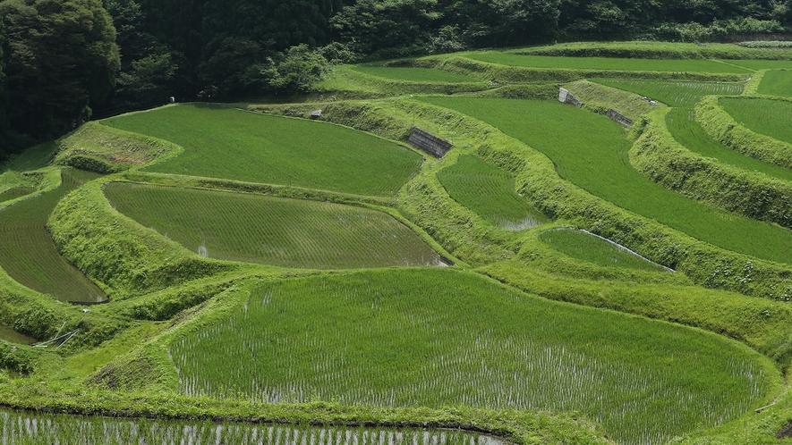 【うへ山の棚田】日本の棚田百選のひとつ 誰もが写真を撮らずにはいられない美しい日本の原風景