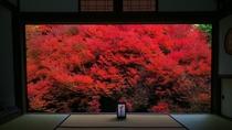 【安国寺のどうだんつつじ紅葉】紅葉がまるで額縁に入った絵画 写真提供:但東シルクロード観光協会