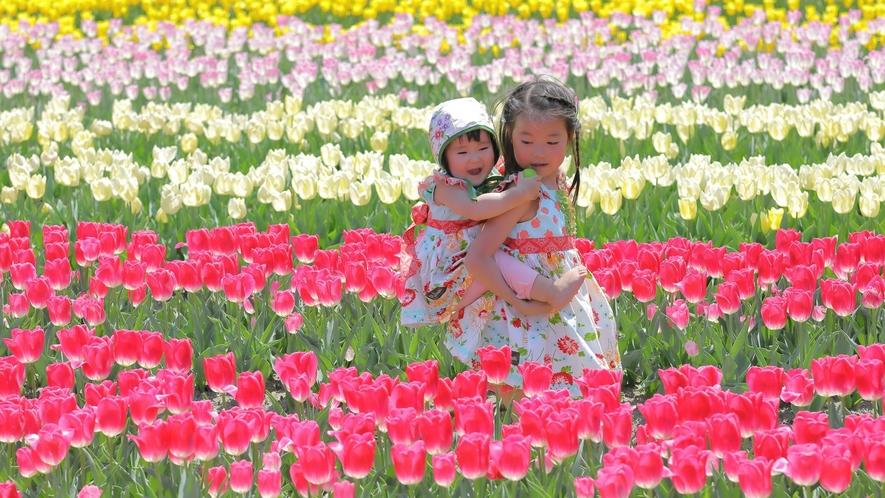 【たんとうチューリップまつり】畑一面に広がるフラワーアート 写真提供:但東シルクロード観光協会