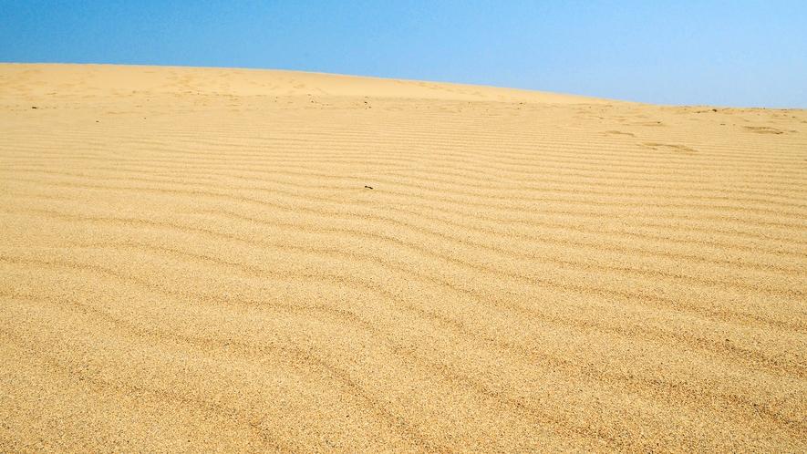 【鳥取砂丘】雄大さと起伏の大きさで、どの砂丘よりも美しいといわれています 当館より約車40分