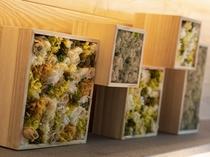 温泉露天風呂付スーペリア限定/オリジナルアートワーク プリザーブドフラワーやモス(苔)をアレンジ