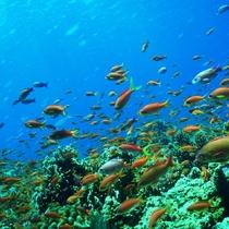 【ダイビング&シュノーケル】宮古島の海はセントラルマリンクラブにおまかせ♪