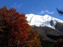 大山紅葉と雪
