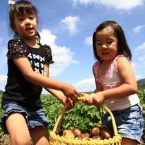 【アクティビティ】夏は採りたて野菜もぐもぐ体験。羊蹄山を望む農場で新鮮野菜を収穫しちゃおう