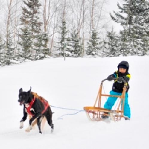 【アクティビティ】冬ならではの体験犬ぞり★こどもも参加できちゃう!