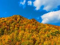 【秋の定山渓】鮮やかに燃ゆる山の情景