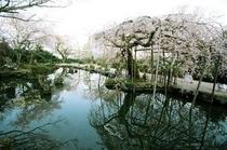 群芳園<桜>