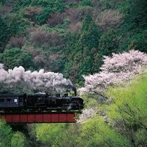 ■ 桜と大井川鐵道を走るSL