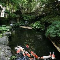 ■ 池(鯉) 池に泳ぐ鯉を眺めながら、のんびりとした時間を過ごせます。