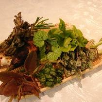 ■ 奥静岡の採れたて山菜