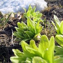 【春野菜・山菜】春の味覚を堪能して、デトックス&美人力アップ!