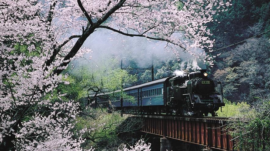 【桜とSL】