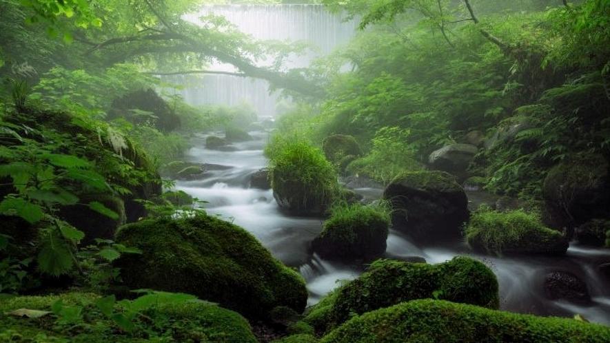 【鳥取県日野郡】木谷沢渓流