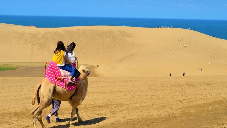 【鳥取砂丘】ラクダとお散歩