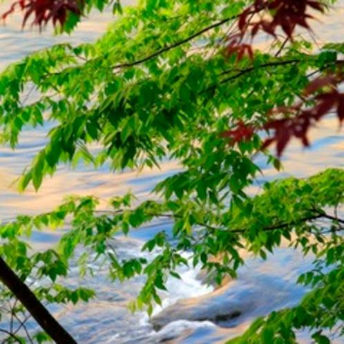 【眺め】川のせせらぎと青々と茂る木々。