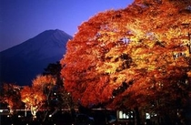 【河口湖もみじ回廊】毎年10月下旬〜11月中旬まで開催。ホテルから車で約35分