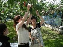 【桃狩り】ご家族・友人で桃狩り体験。楽しい思い出作りに最適です♪