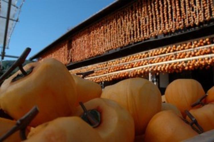 【枯露柿】秋の風物詩枯露柿作り