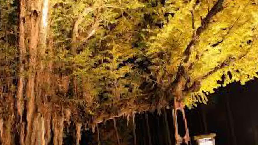 菩提寺の大イチョウライトアップ